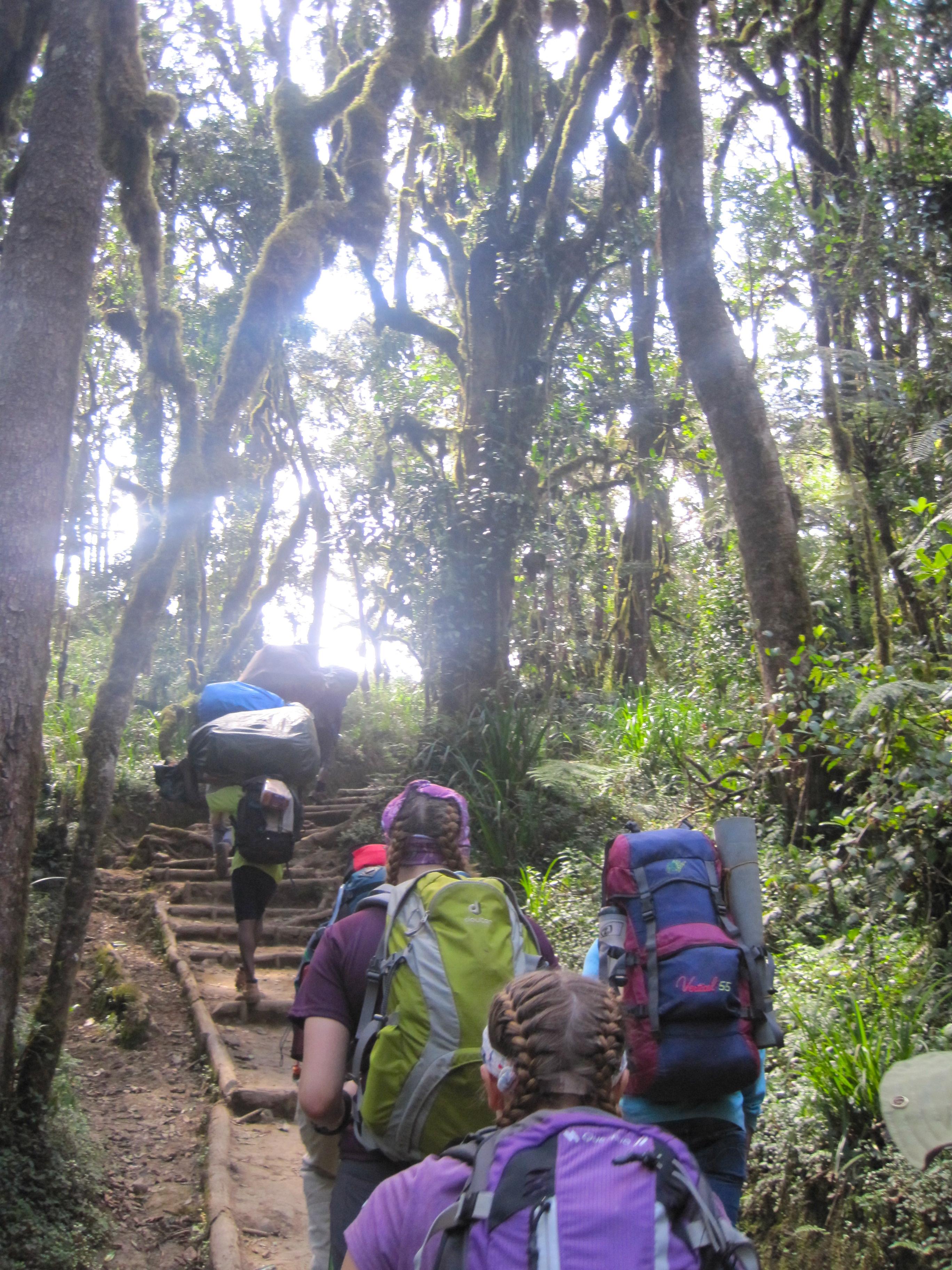 Climbing Kilimanjaro Rainforest walk