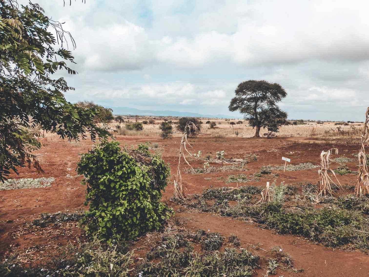 View from Tanzanian School