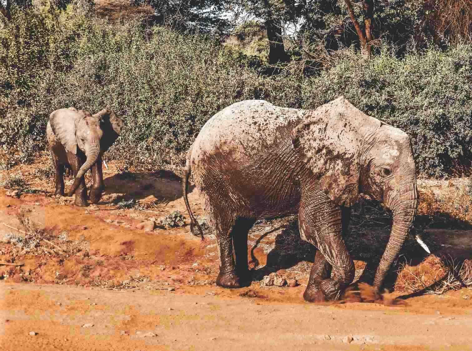 Baby Elephant Lake Manyara