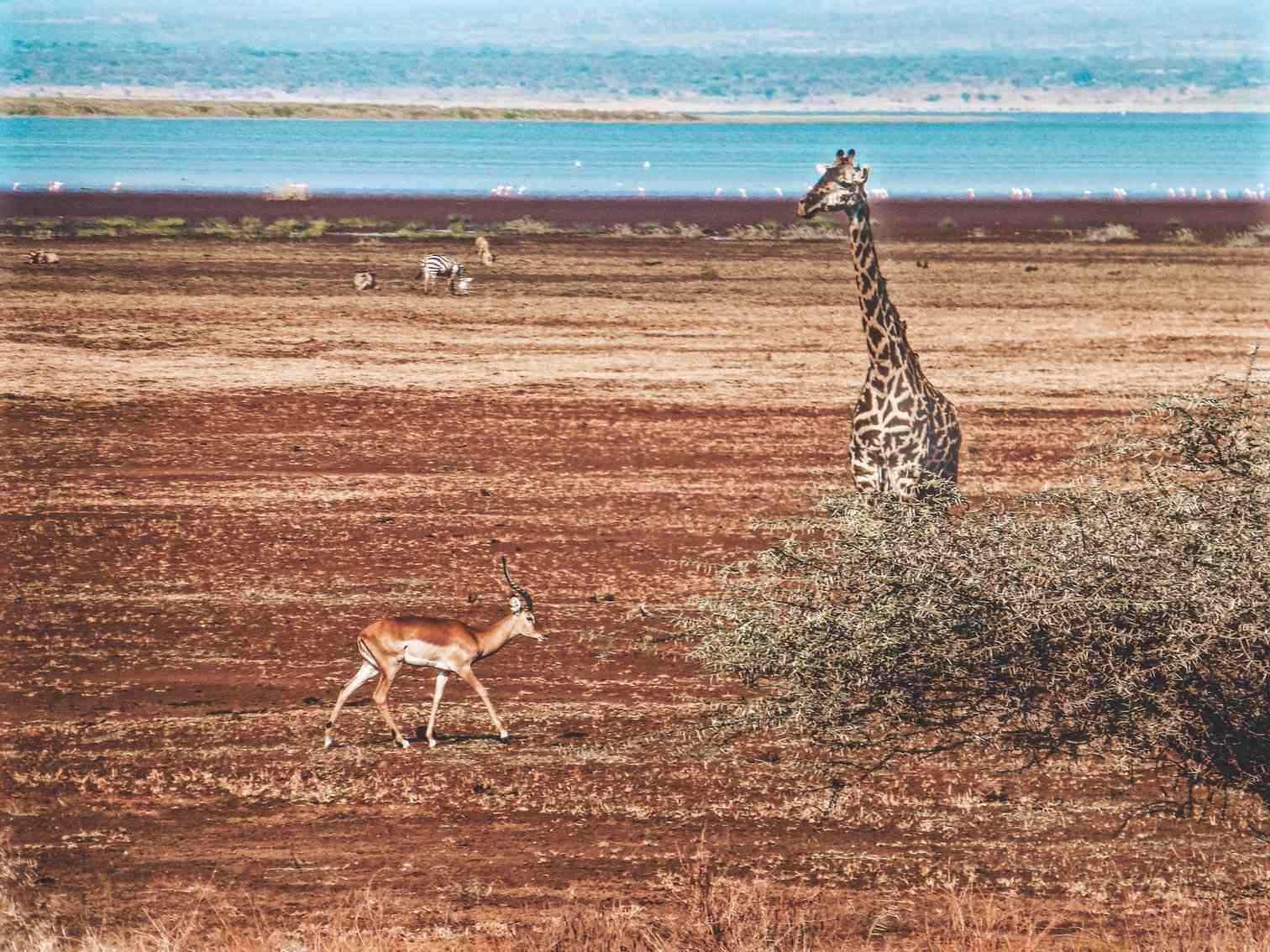 Manyara Safari