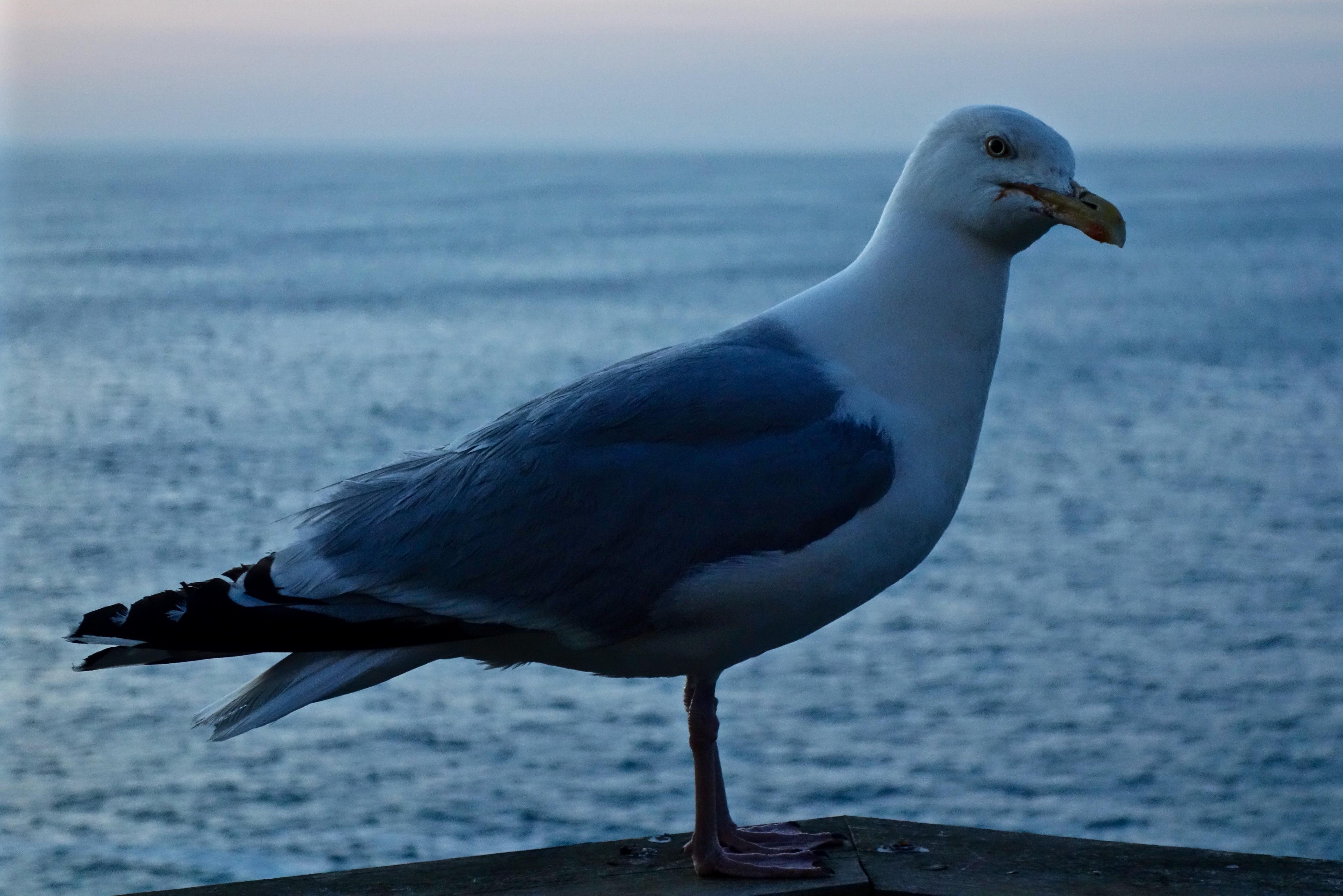 Trevone Bay, Cornwall