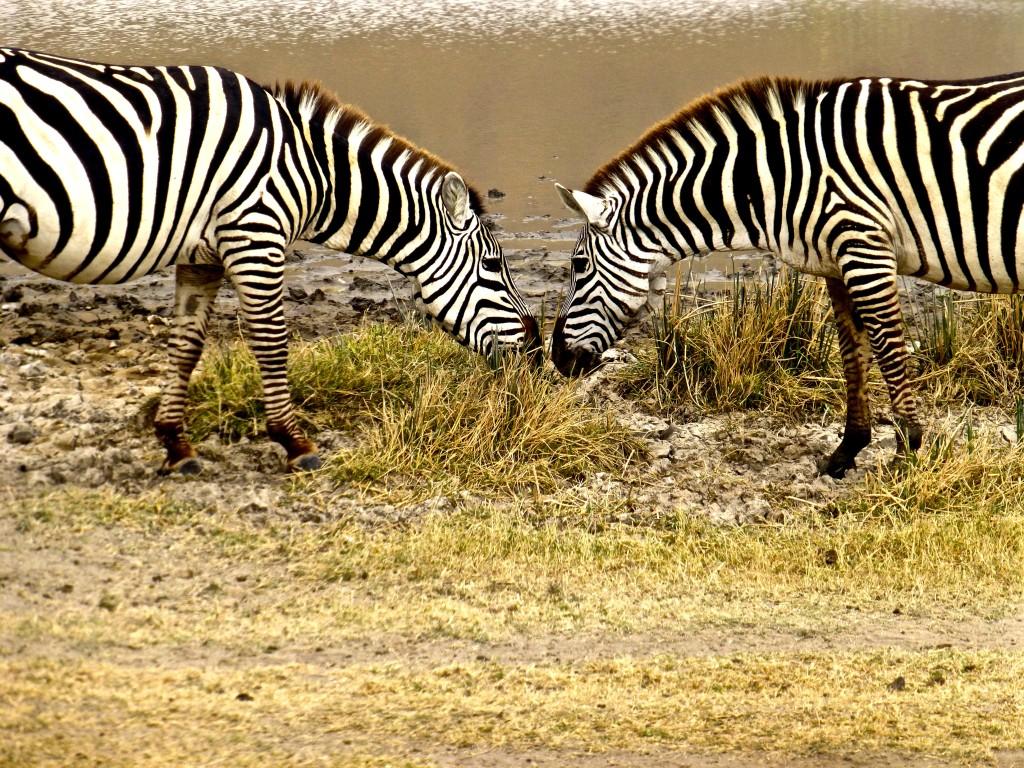 Ngorongoro Crater Safari, Tanzania