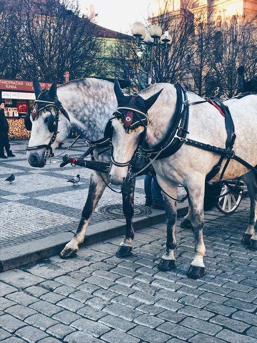 Prague Christmas markets horses
