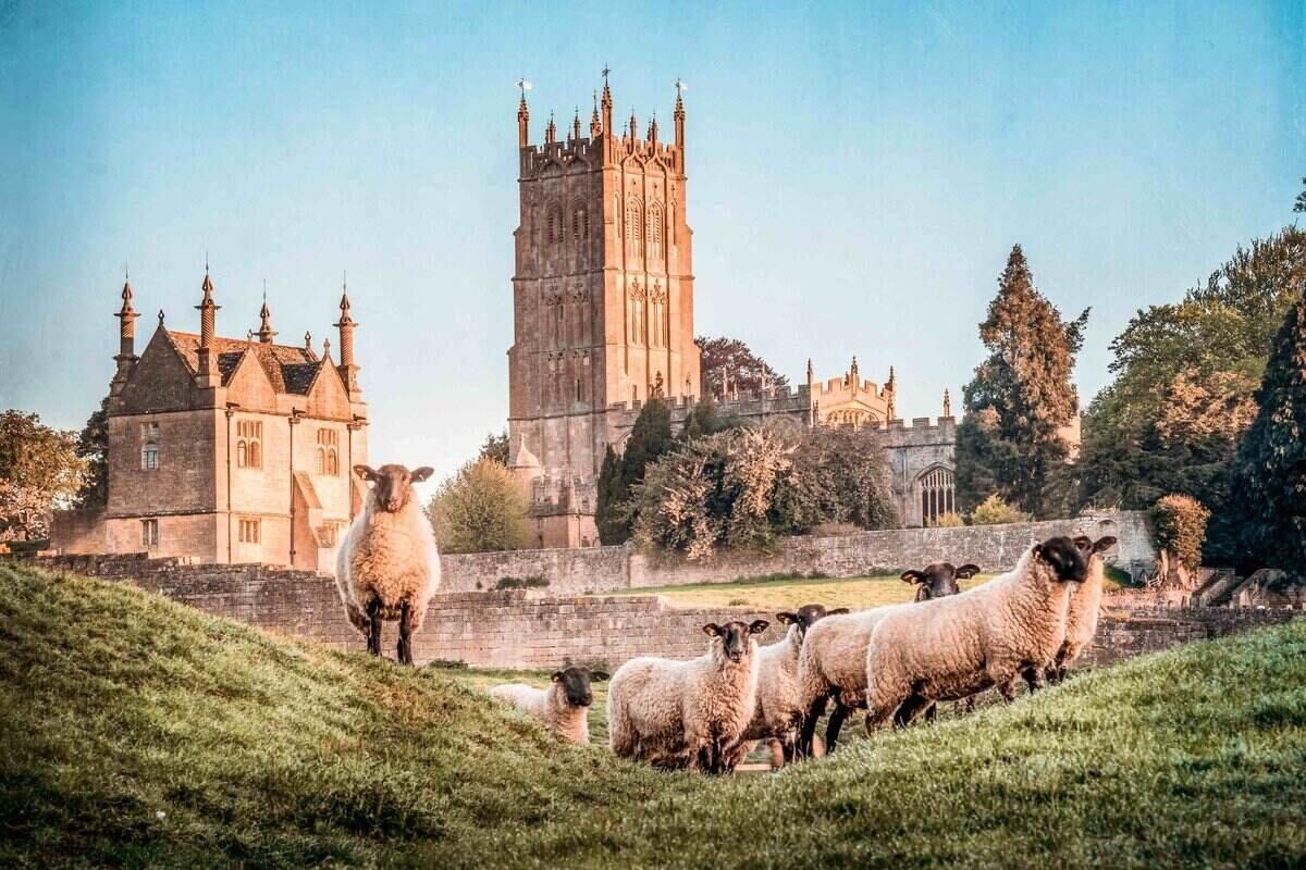 Sheep in Chipping Campden